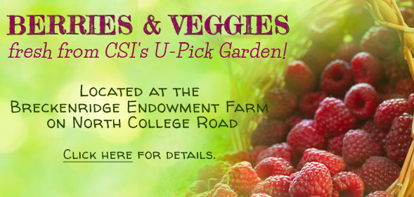 Raspberries and vegetables will be available for sale at the College of Southern Idaho's Breckenridge Endowment Farm on North College Road starting July 14