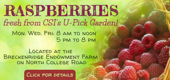 CSI U-pick garden is open three days a week - Mondays, Wednesday, and Fridays: 8am to noon or 5pm to 8pm - Click for details